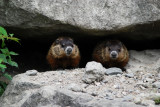 The Groundhog Brothers