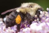 0807 beesyard 30 of 43.jpg
