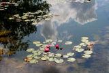 Waterlily Pond.jpg
