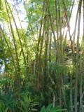 Jungle Walk & Aqueduct