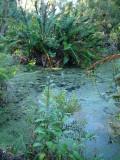 Palmer Water Garden