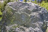 Espaliered mtn mahogany on granite