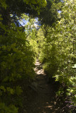 Narrow trail at times..