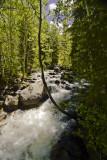 South side of stream (Bells Cyn)
