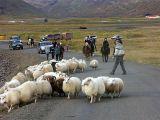 John stuggar við þeim niður á Skógargötuna