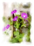 Miscellaneous Flora