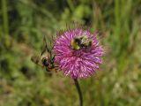 Bees-Valle di Non.jpg