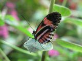 Butterfly2-Trieste-usm.jpg