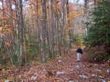 Swift Camp Creek Overlook Trail