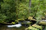 Multnomah Creek  2008