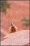 _ADR7743 marmot wf.jpg