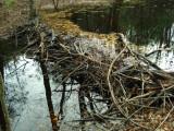 November 1, 2009 Beaver Recon - Honey Brook