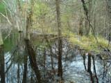 Dam of tributary entering Honey Brook at east corner of drop zone.JPG