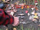 October 23 2009 Beaver Recon