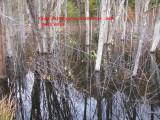0645 old fence on N side.jpg