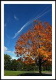 oct 5 tree