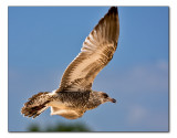 july 6 seagull