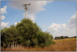 electric bush