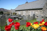Tulips 'n' Church