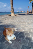 Ginger Cat on Pafos Promenade
