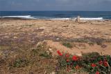 Pafos Coastline 03