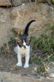 Small Kitten Paphos 03