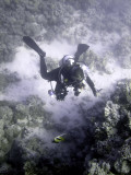 Diver and Hard Coral
