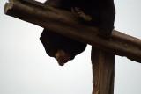 Malayan Sun Bear 32
