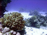 Coral Bommies on Seabed