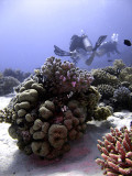 Divers Swimming Above Coral Bommies