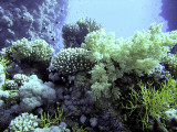 Selection of Hard and Soft Corals