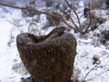 Coral Grouper Resting on Large Sponge 3