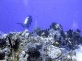Diver at Boat Cove