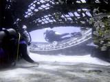 Swimming Through the Thunderdome