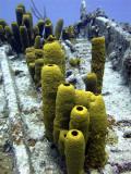 Yellow Sponge on the Thunderdome