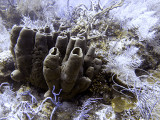 Large Sponge and Soft Coral
