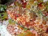Lizard Fish Head