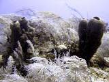 Sponge  Soft Coral at Double D
