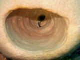 Small Fish Inside Pink Barrel Sponge