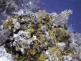 Underwater Scene at French Caye