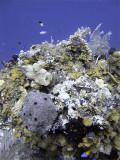 Underwater Scene at French Caye 2