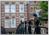 EU-08-Amsterdam_040.jpg