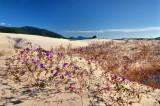 dunas floridas - joaquina