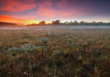 paepalanthus-at-sunset4.jpg