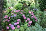 Garden View - Hydrangea