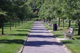 Cherry Tree Orchard Walkway