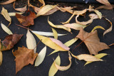 Willow & Sycamore Tree Ground Foliage