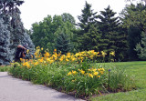 Lilies - Conservatory Gardens