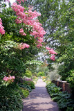 Crepe Myrtle Blossoms - Conservatory Gardens