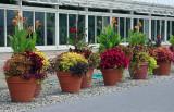 Potted Plant Arrangements - Lily Pond Area